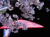 Red Umbrella and Cherry Blossoms, Kyoto, Japan