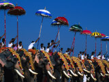 Men Riding Decorated Elephants at Annual Pooram Festival, Thrissur, India