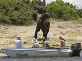 Tourists Watching African Elephants, from Boat, Chobe National Park, Botswana, Africa