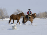 Cowboy Leading Sorrel Quarter Horse Geldings, with Two Mixed Breed Dogs, Longmont, Colorado, USA