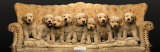 Golden Pup Line-Up
