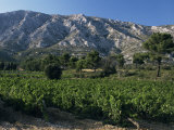 Vineyards and Montagne Ste. Victoire, Near Aix-En-Provence, Bouches-Du-Rhone, Provence, France
