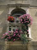 Floral Balconies, Rovinj, Croatia