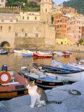 Cat by Harbour, Village of Vernazza, Cinque Terre, Unesco World Heritage Site, Liguria, Italy