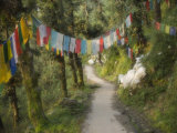 Path and Prayer Flags, Mcleod Ganj, Dharamsala, Himachal Pradesh State, India