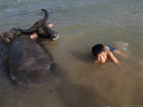 A Boy Bathes with His Water Buffalo in the Mekong River, Near Kratie, Eastern Cambodia, Indochina