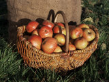 Basket of Cider Apples, Pays d'Auge, Normandie (Normandy), France