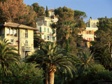 Buy Hillside Mansions Amongst Palms, Santa Margherita Ligure, Portofino Peninsula, Liguria, Italy at AllPosters.com