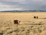 The Great Plains, New Mexico, USA Photographic Print