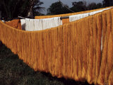 Silk Drying, Domestic Industry, Thailand, Southeast Asia Photographic Print