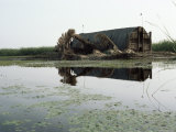Mudhif (Guest House), Marshes, Iraq, Middle East