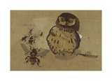 Owl And Bee