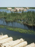 Reed Mats Ready for Sale, Village Near Qurna, Iraq, Middle East