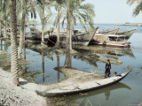 River Tigris, Near Qurna, Iraq, Middle East