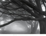 Buy Cypresses, Skyline Drive, South San Francisco, 1996 at AllPosters.com
