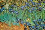 Garden of Irises (Les Irises, Saint-Remy), c. 1889 Poster