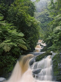River Running through Montane Rainforest, Nyungwe Forest National Park, Gisenyi, Rwanda
