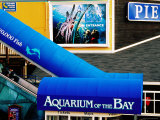 Aquarium of the Bay, Pier 39, Fisherman's Wharf, San Francisco, California
