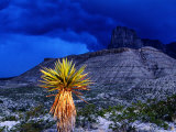 Yucca with Thunderstorm in Background, Guadalupe Mountains National Park, Texas