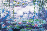 Water Lilies Art Print