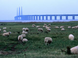 The New Oresund Bridge Between Malmo and Copenhagen from Bunkeflostrand, Malmo, Skane, Sweden