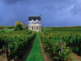 House in a Vineyard, Loire Valley, Chinon, Centre, France