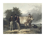 Four Men With A Bull
