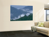 Buy Cloud Forest, Central America at AllPosters.com