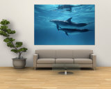 Buy A Pair of Spotted Dolphins at AllPosters.com