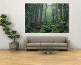 Buy Moss-Covered Rocks Fill a Misty Wooded Hillside at AllPosters.com