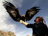 Takhuu Raising His Eagle, Golden Eagle Festival, Mongolia Photographic Print