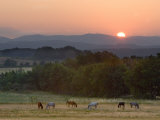 Horses Graze at Sunrise, Provence, France