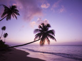 Buy Palm Trees at Sunset, Coconut Grove Beach at Cade's Bay, Nevis, Caribbean at AllPosters.com