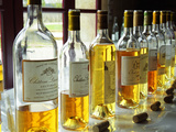 Sauternes Wines at Union Des Grand Crus Tasting, Domaine De Chevalier in Graves, Bordeaux, France