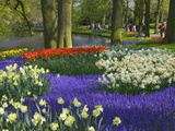 Tulips in Keukenhof Gardens, Amsterdam, Netherlands