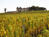 Vineyard and Medieval Chateau, Choteau d'Yquem, Sauternes, Bordeaux, Gironde, France