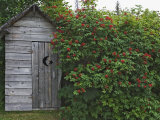 Outhouse Built in 1929 Surrounded by Blooming Elderberrys, Homer, Alaska, USA