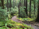 Trail to Soleduc Falls, Olympic National Park, Washington, USA