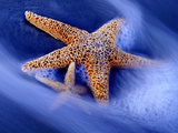 Buy Two Starfish on Beach, Hilton Head Island, South Carolina, USA at AllPosters.com