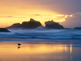 Beach at Sunset with Sea Stacks and Gull, Bandon, Oregon, USA