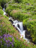 Elk Cove Creek Flowing Through Meadow of Wildflowers, Mt. Hood Wilderness, Oregon, USA