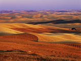View of Colorful Palouse Farm Country at Twilight, Washington, USA