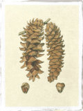 Crackled Woodland Pinecones III