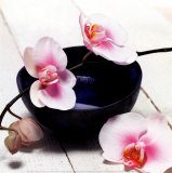 Orchid in a Bowl,