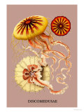 Buy Jellyfish: Discomedusae at AllPosters.com