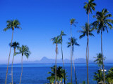 Palm Trees and Island, Tahiti, Society Islands, French Polynesia, South Pacific Islands, Pacific