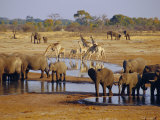 Giraffe and Elephant at a Water Hole, Etosha National Park, Namibia