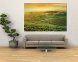 Vineyard, Hunter Valley, Australia Wall Mural