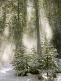 Buy Winter Forest I at AllPosters.com
