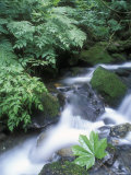 Clean Water Creek Flowing Through Forest Greenery, Alaska